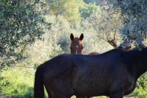 Passeggiare a cavallo Suvereto