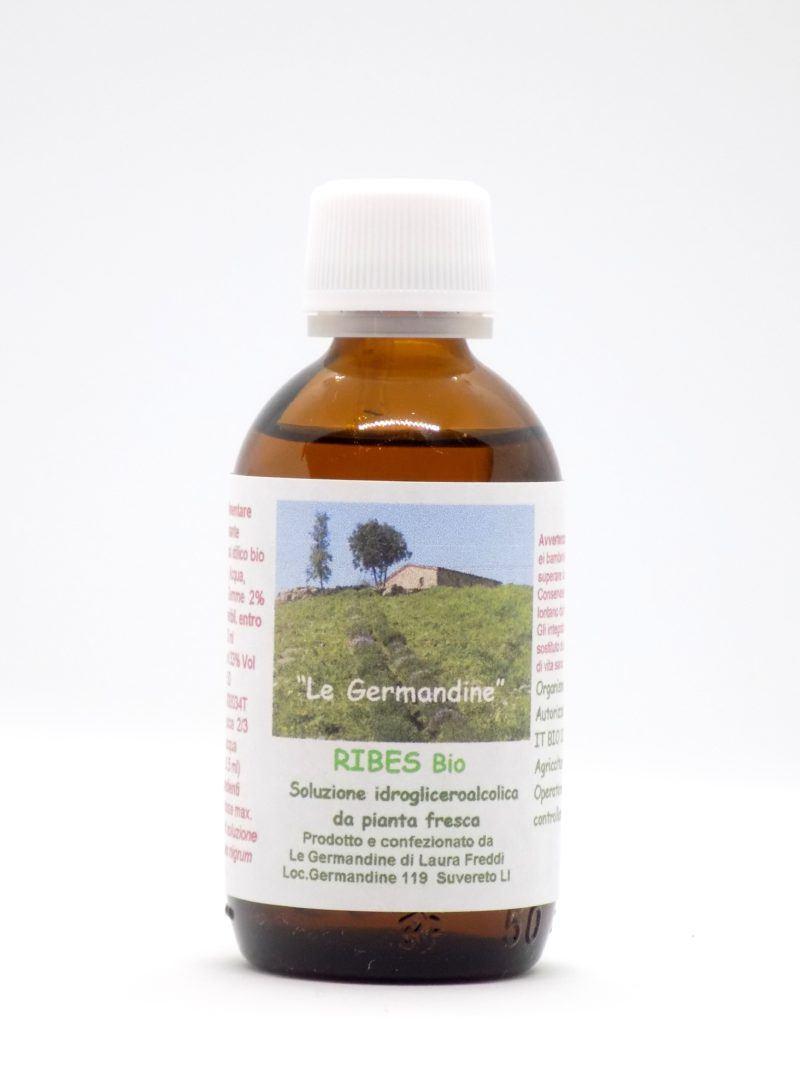 Ribes Bio